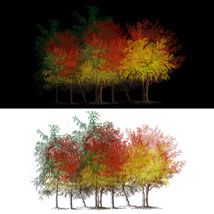 Sketched Trees PS Brushes Pack 1 image 6