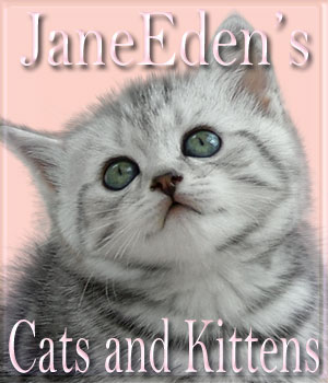 JaneEden's Cats and Kittens 2D Graphics JaneEden
