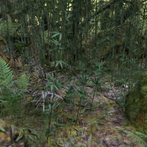 3D Scenery: Wild Mossy Bamboo Forest image 1
