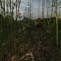 3D Scenery: Wild Mossy Bamboo Forest image 2
