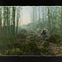 3D Scenery: Wild Mossy Bamboo Forest image 4