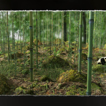 3D Scenery: Wild Mossy Bamboo Forest image 6