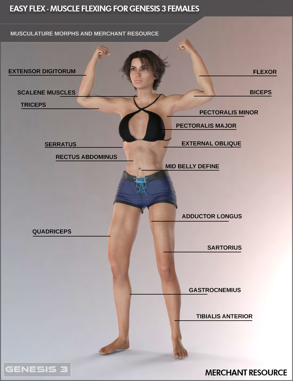Easy Flex - Muscle Flexing Control for Genesis 3 Females and Merchant Resource