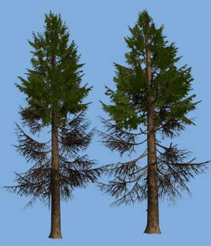 Fir3DR 3D Models Dinoraul
