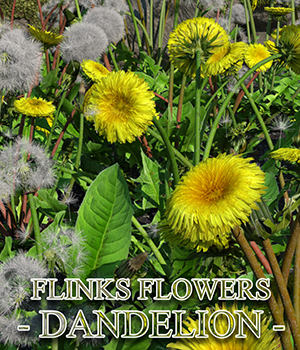 Flinks Flowers - Flower 7 - Dandelion 3D Models Flink