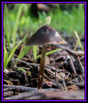 CPS-FabulousFungi02 2D Graphics CreekyPointStudios