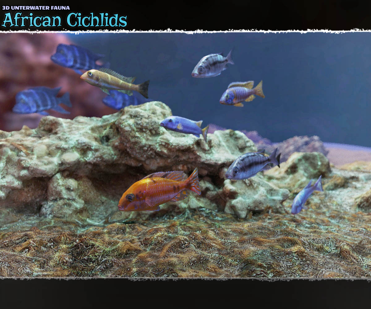 3D Underwater Fauna: African Cichlids - Extended License