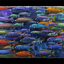 3D Underwater Fauna: African Cichlids - Extended License image 2