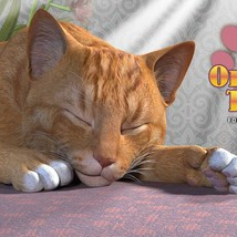 CWRW Orange Tabby for the HiveWire House Cat image 3
