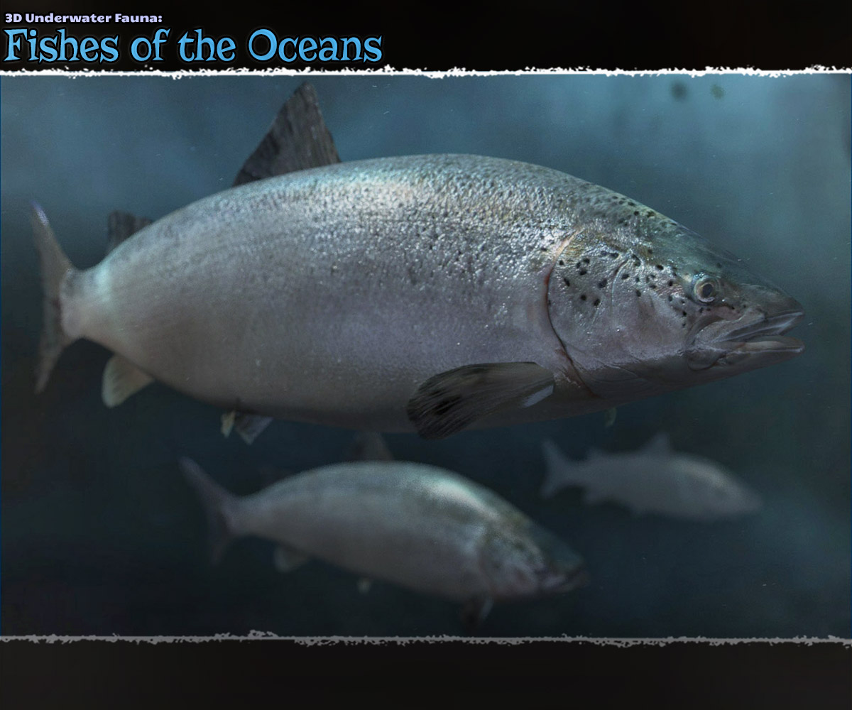 3D Underwater Fauna: Fishes of the Ocean