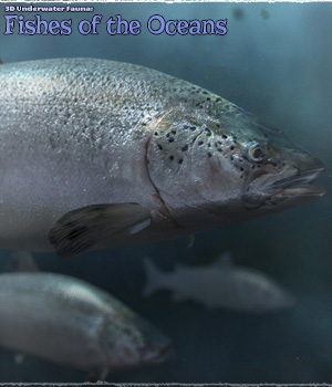 3D Underwater Fauna: Fishes of the Ocean - Extended License 3D Models Extended Licenses ShaaraMuse3D