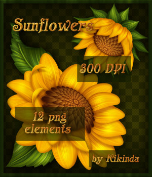 Sunflowers Elements 2D Graphics kikinda