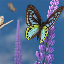 3D Insect Fauna: Flutter of Butterflies - Extended License image 1