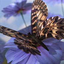 3D Insect Fauna: Flutter of Butterflies - Extended License image 2