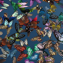 3D Insect Fauna: Flutter of Butterflies - Extended License image 4