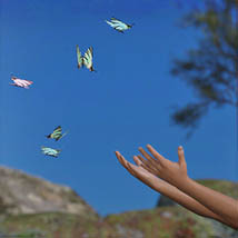 3D Insect Fauna: Flutter of Butterflies - Extended License image 6