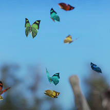 3D Insect Fauna: Flutter of Butterflies - Extended License image 7