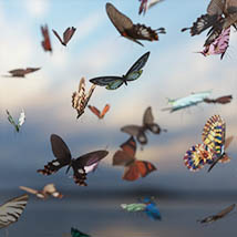 3D Insect Fauna: Flutter of Butterflies - Extended License image 9