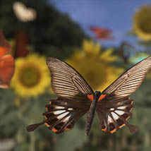 3D Insect Fauna: Flutter of Butterflies - Extended License image 10