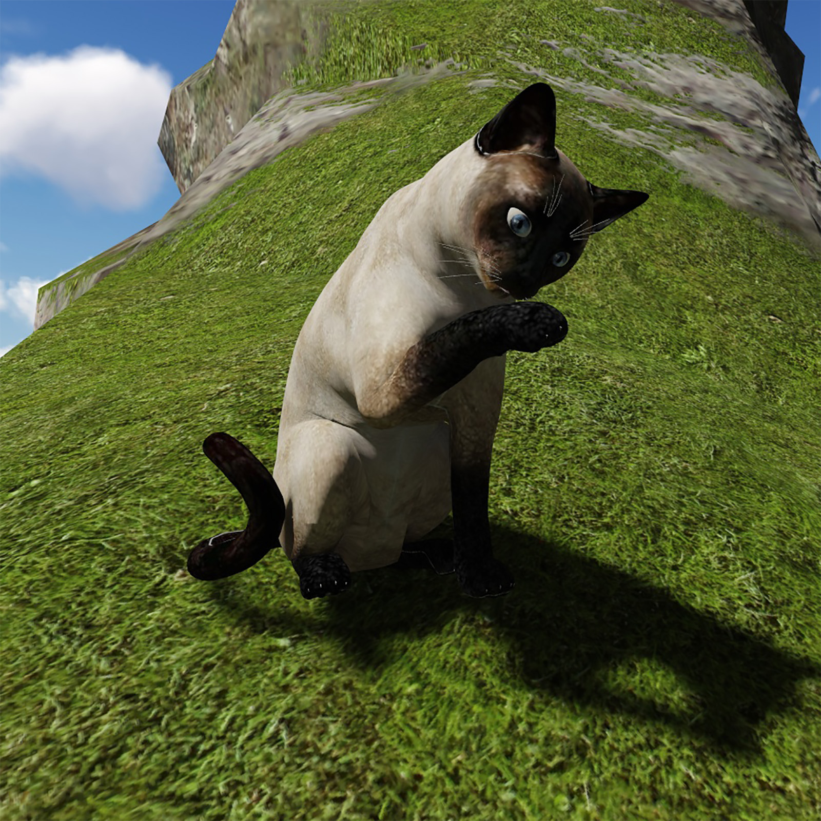 Siamese Cat - Extended Licence