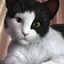 CWRW Black, White and Tuxedos for the HW House Cat image 1