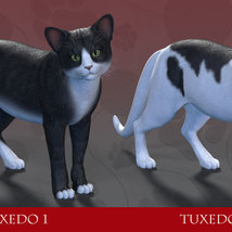 CWRW Black, White and Tuxedos for the HW House Cat image 3