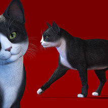 CWRW Black, White and Tuxedos for the HW House Cat image 7