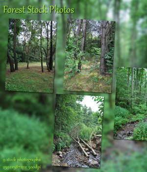 Forest Stock Photos 2D Graphics VanishingPoint