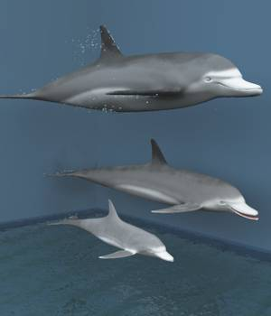 Bottlenose Dolphins For Vue 3D Models forester