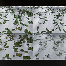 Photo Plants: Leafdropper2 for Poser and Daz Studio image 7