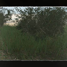 Plant Foundations: Mediterranean Wilds for Poser image 1