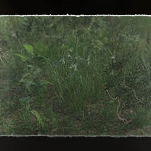 Plant Foundations: Mediterranean Wilds for Poser image 3