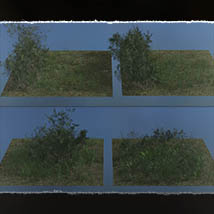 Plant Foundations: Mediterranean Wilds for Poser image 4