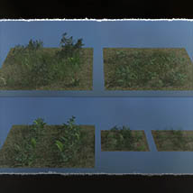 Plant Foundations: Mediterranean Wilds for Poser image 5