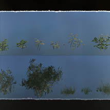 Plant Foundations: Mediterranean Wilds for Poser image 6
