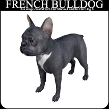 FRENCH BULLDOG Lovers Poses for French Bulldog Breed (Daz Dog 8) image 5