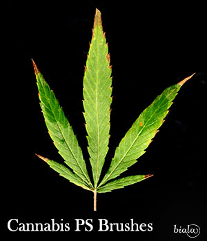 Cannabis PS Brushes 2D Graphics biala