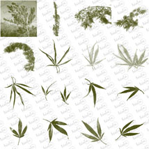 Cannabis PS Brushes image 3