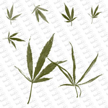 Cannabis PS Brushes image 4