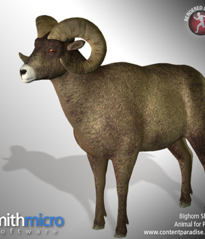 American Bighorn Sheep (Wildlife Series) Legacy Discounted Content Poser_Software