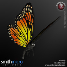 Butterfly image 3
