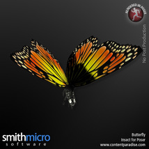 Butterfly image 4