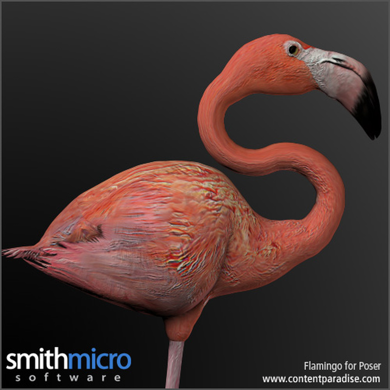 Caribbean Flamingo by Poser_Software