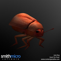 June Bug image 2