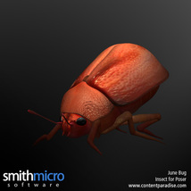 June Bug image 3