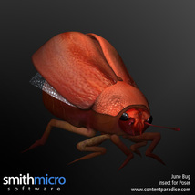 June Bug image 4