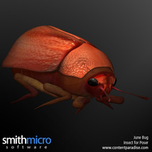 June Bug image 6