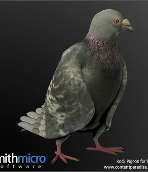 Rock Pigeon Legacy Discounted Content Smith_Micro
