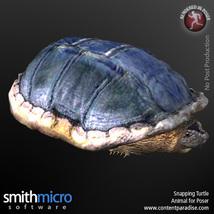 Snapping Turtle image 3