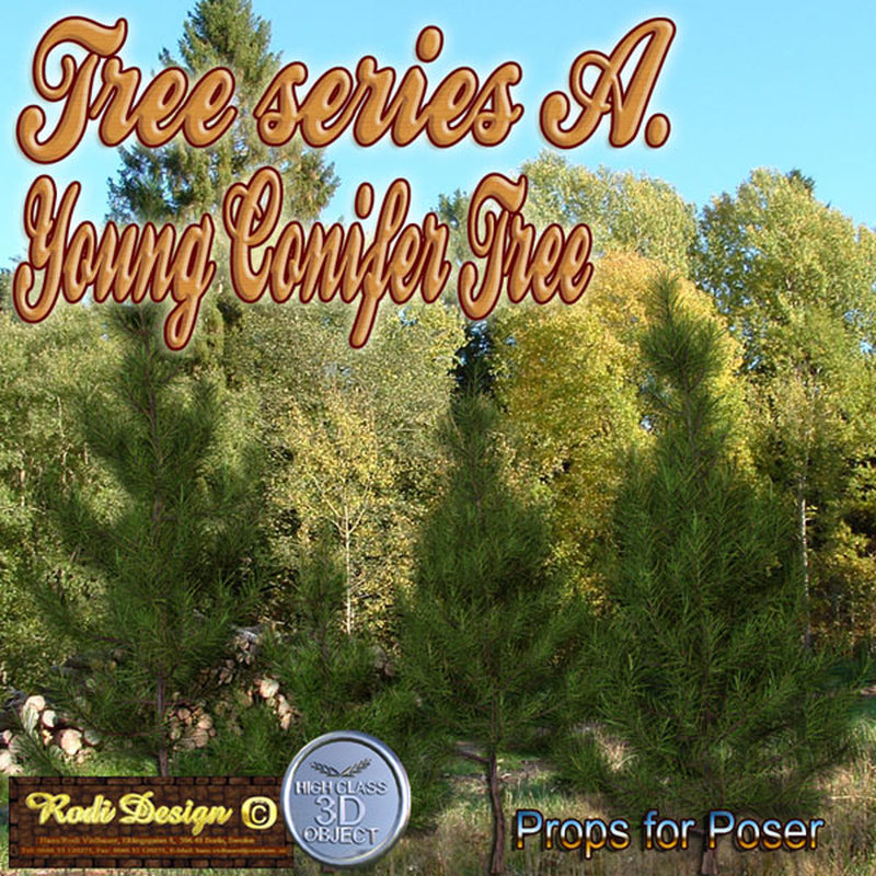 Young Conifer Tree
